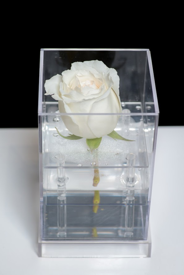 Acrylic single stem rose box
