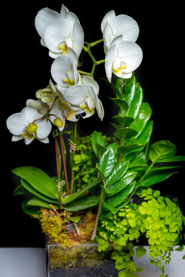 Indoor Landscape with orchids