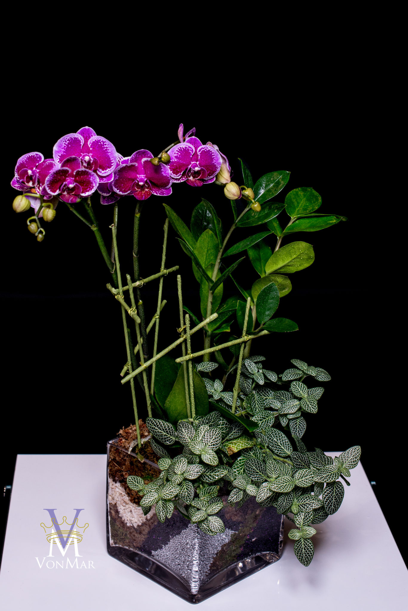 Orchid indoor landscape with layers of moss and gravel